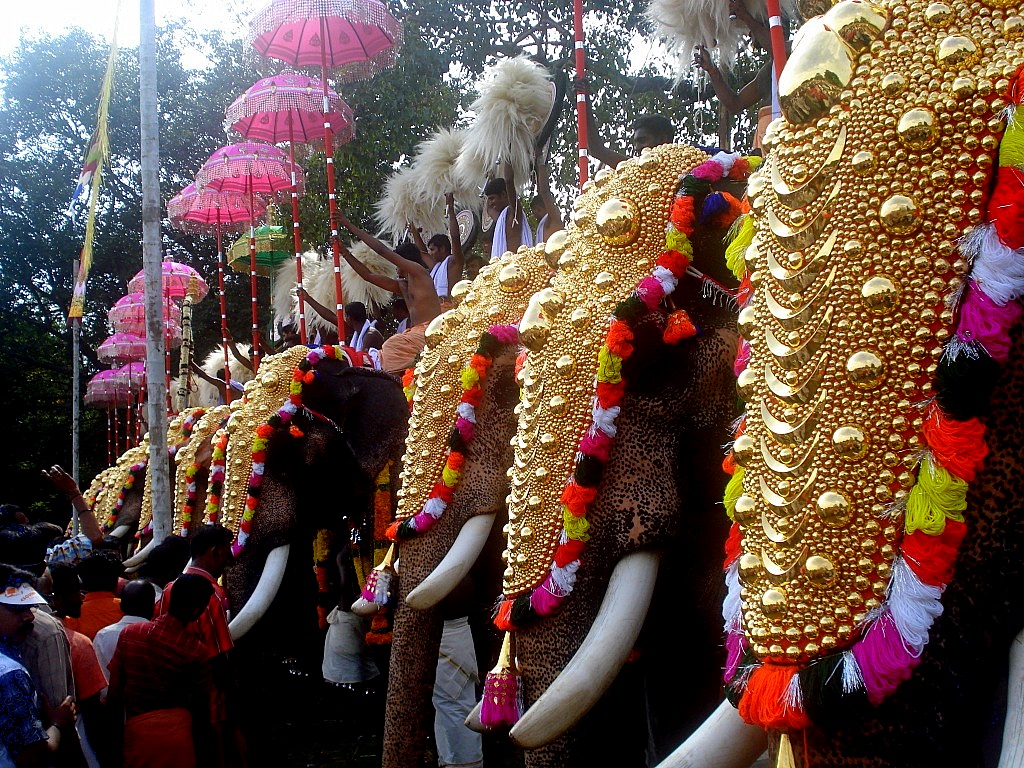 Elephant Festival In India 3