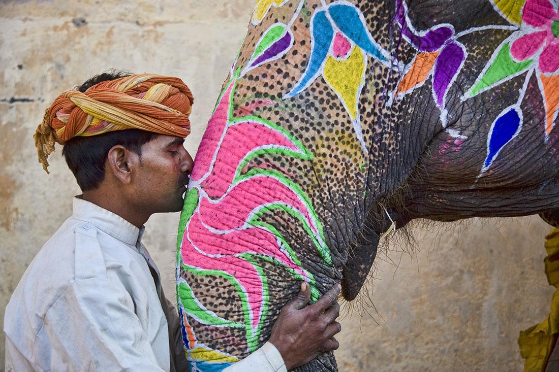 Elephant Festival In India 4