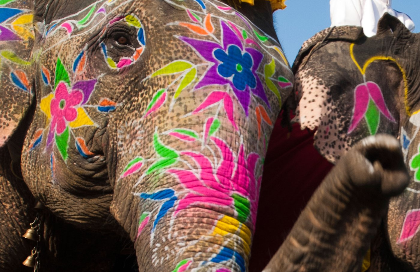 Two Indian man on painted elephants during the Annual Jaipur Elephant Festival