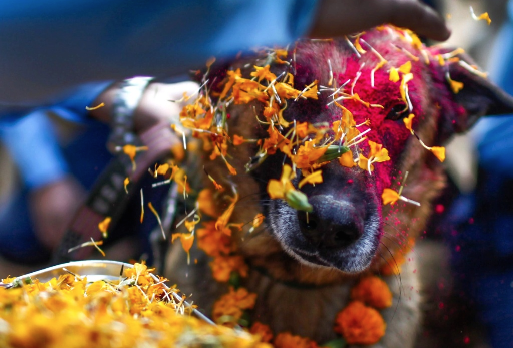 Nepal's Festival To Celebrate Dogs 1