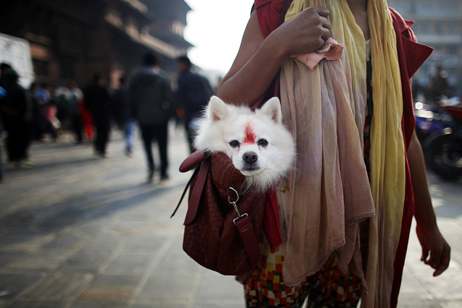Nepal's Festival To Celebrate Dogs 2