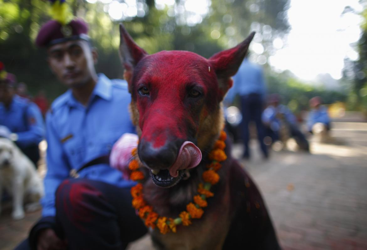 Nepal's Festival To Celebrate Dogs 5
