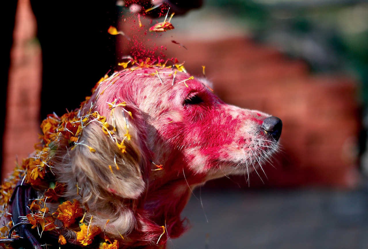 Nepal's Festival To Celebrate Dogs 8