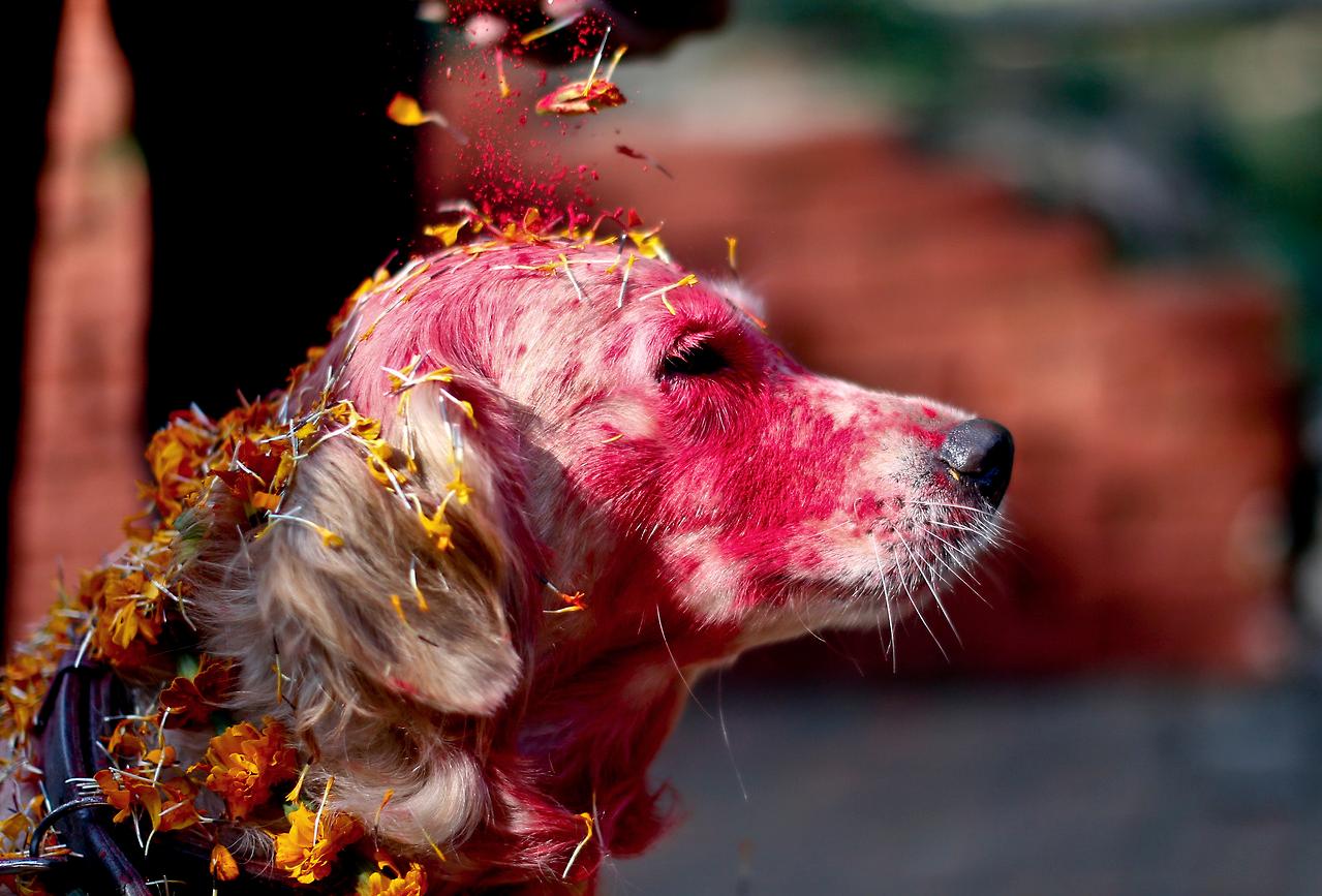Фестиваля собак