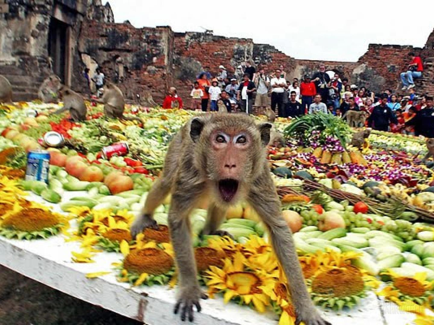 The Monkey Buffet Festival In Thailand 1