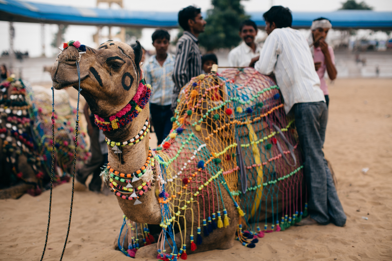 The Pushkar Camel Fair In Rajasthan, India 4