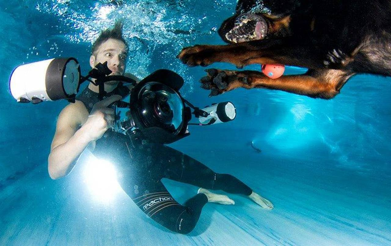 Underwater Dogs By Seth Casteel 20
