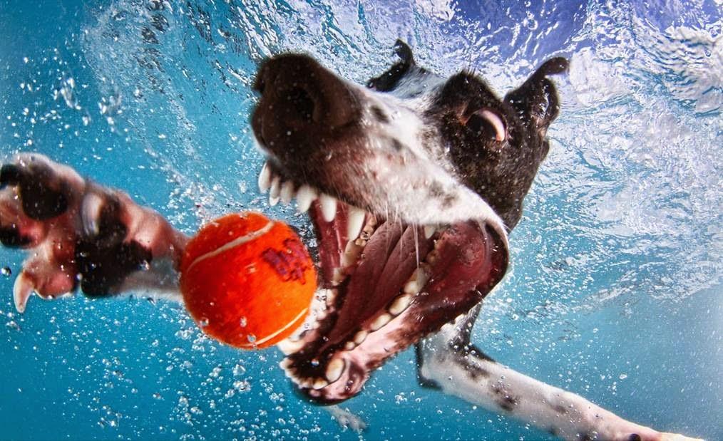 Underwater Dogs By Seth Casteel 9