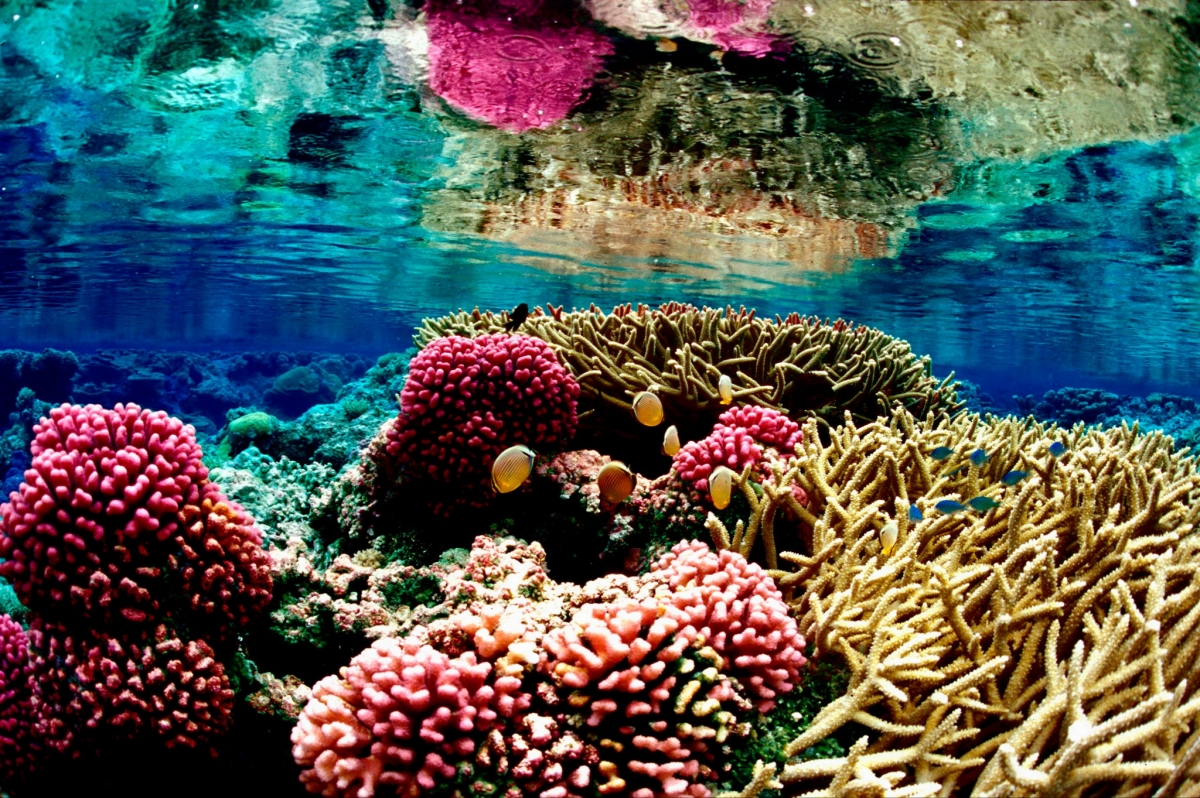 10. Coral Reef, Cayman Islands