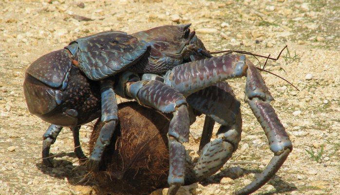 15 of The Most Terrifying Animals You Never Knew About 3