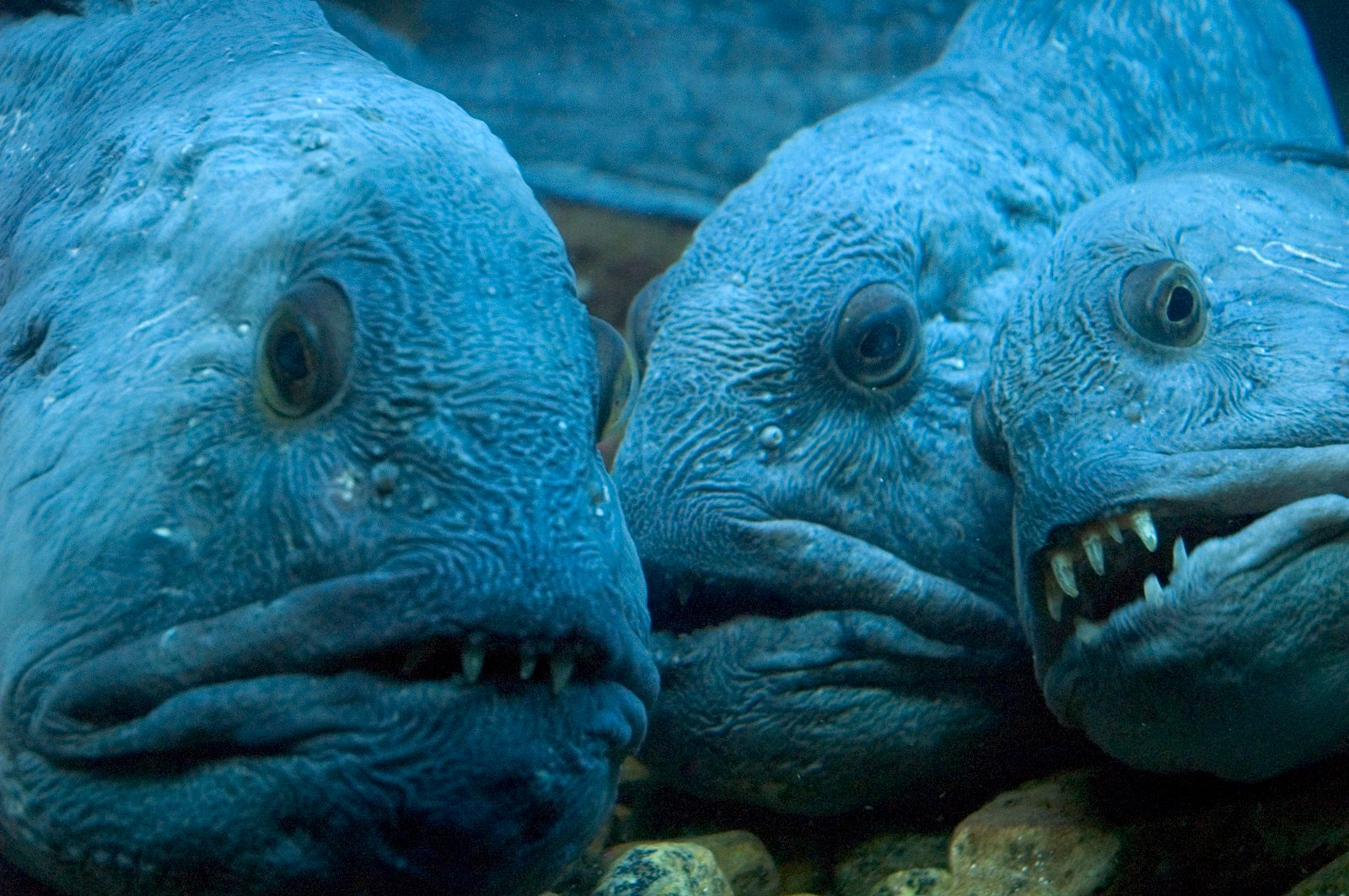 15 of The Most Terrifying Animals You Never Knew About 8