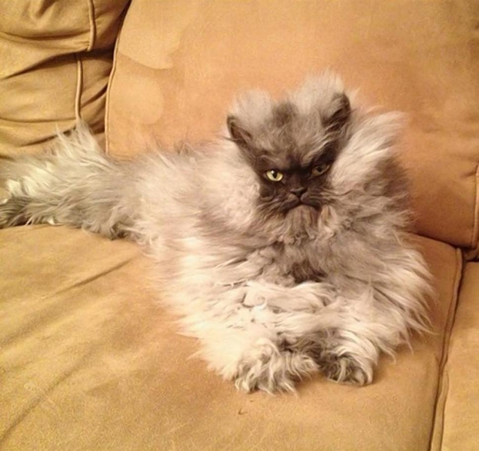 Colonel Meow 2