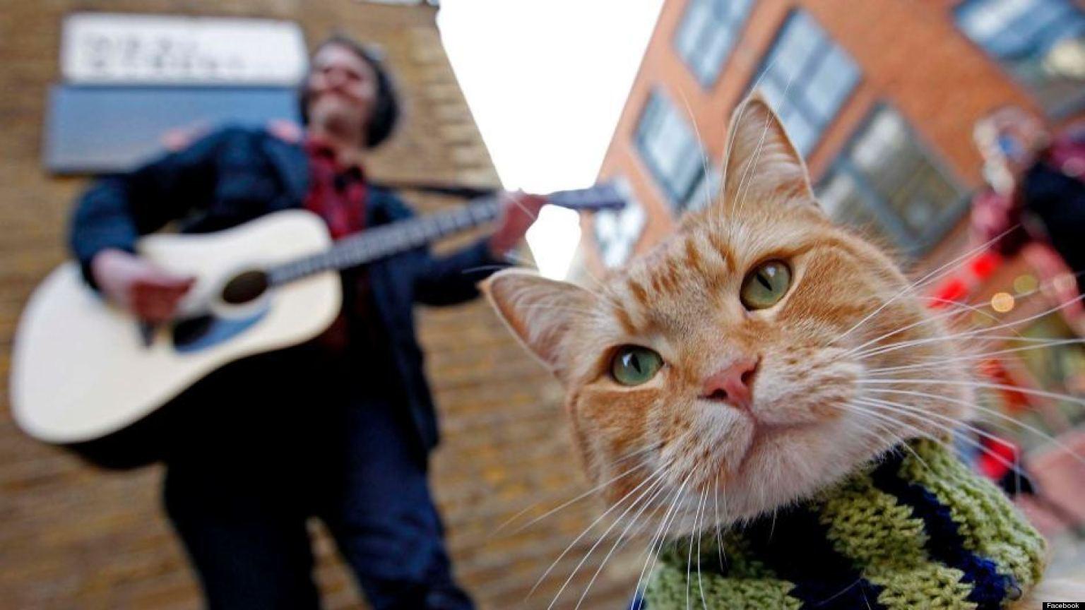 Street Cat Bob 1