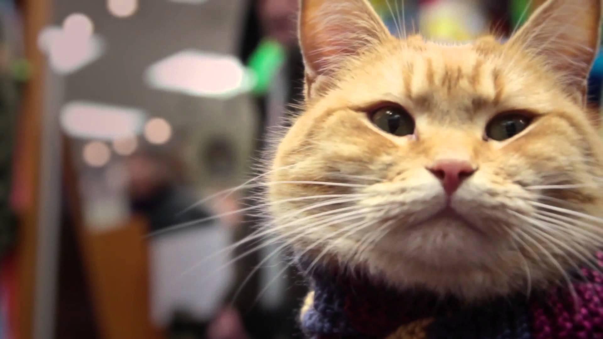 Street Cat Bob 2
