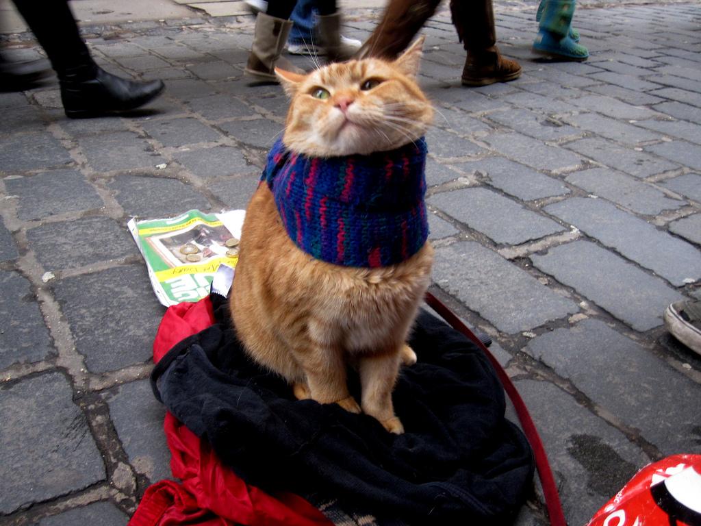 Street Cat Bob 4