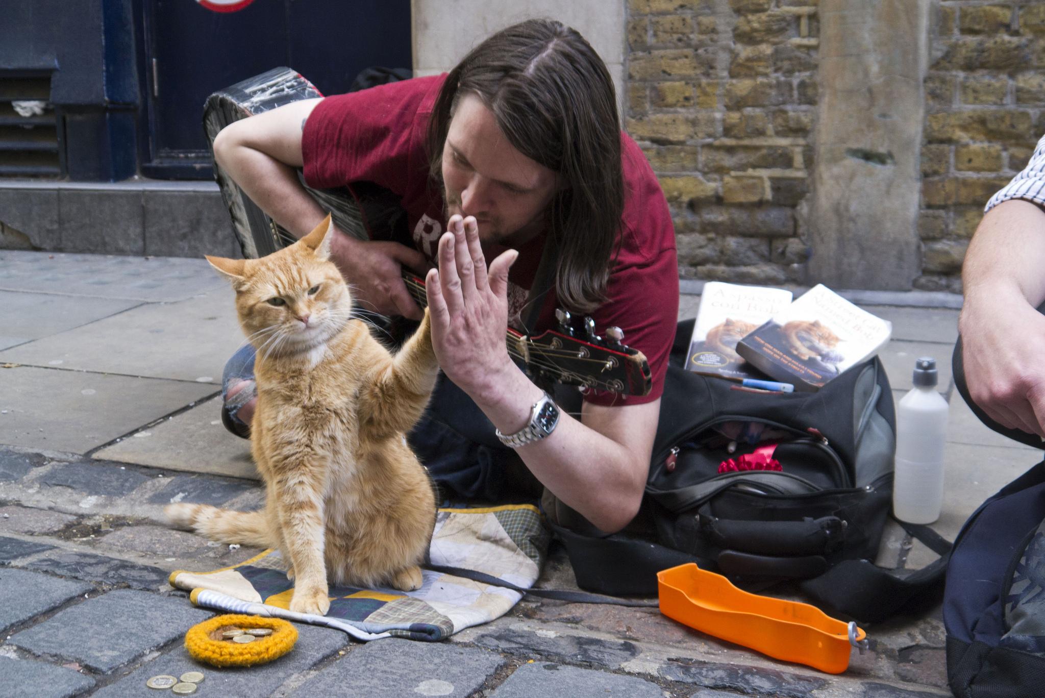 Street Cat Bob 6