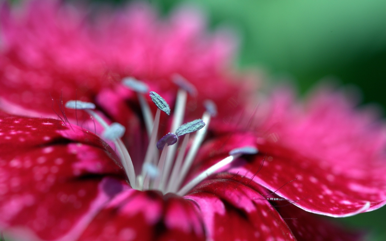 macro_photos_that_take_you_to_another_world_05