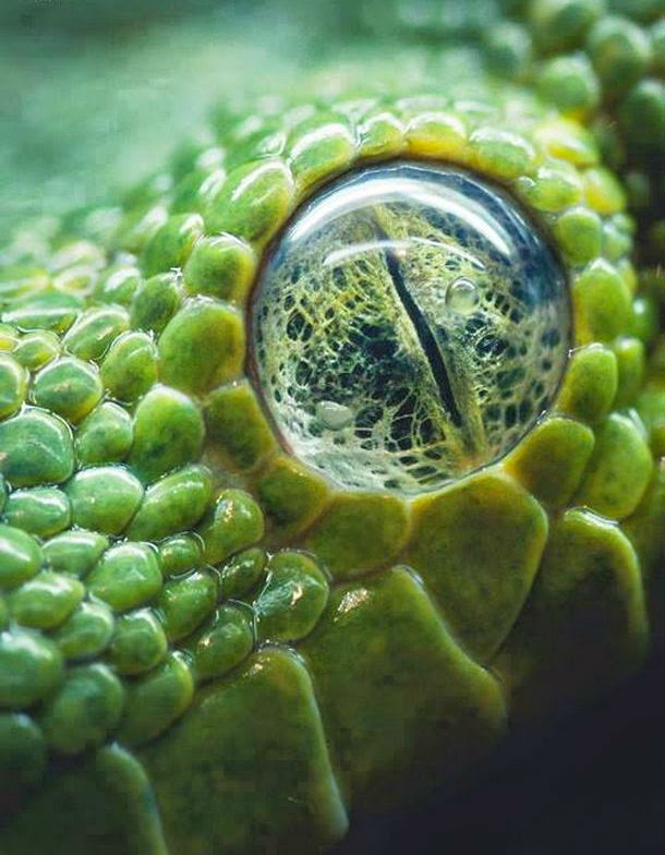 macro_photos_that_take_you_to_another_world_11