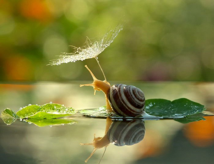 macro_photos_that_take_you_to_another_world_15