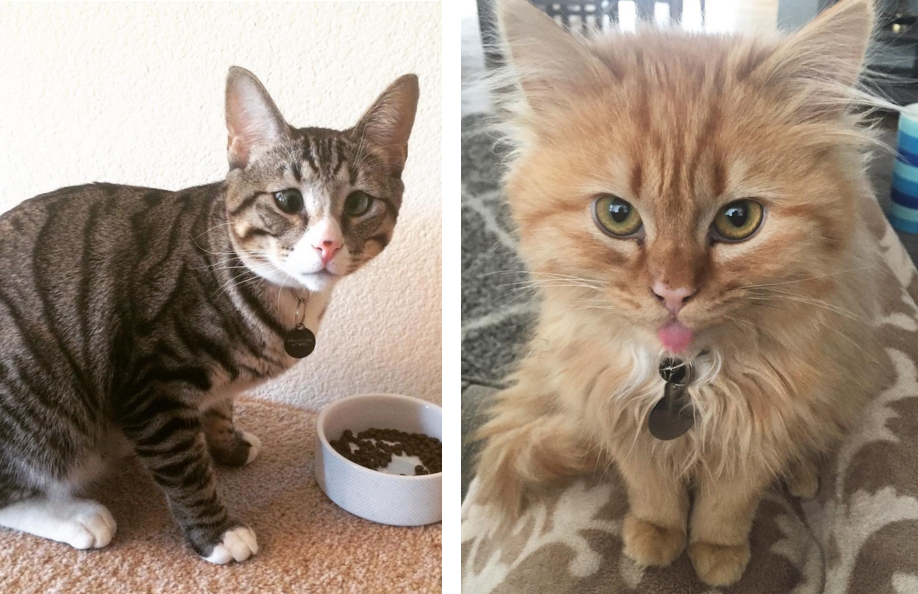 these_two_kittens_are_polar_opposites_but_theyll_steal_your_heart_10