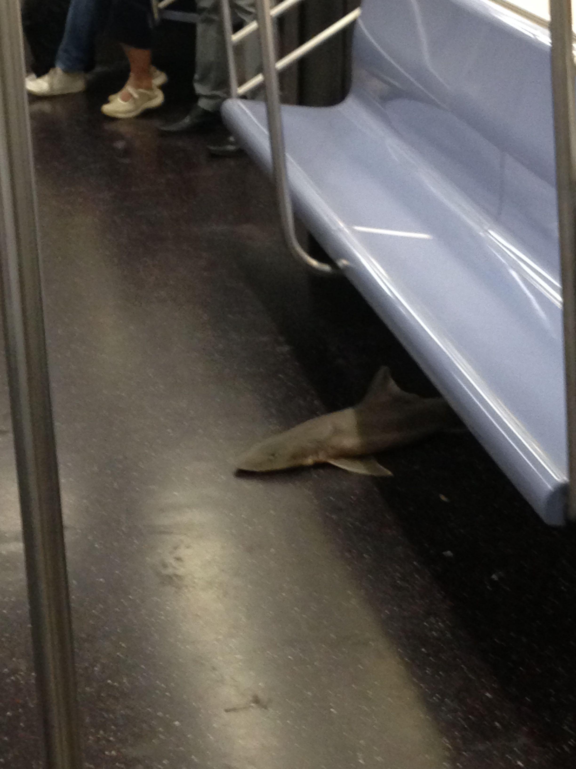 exceptionally-bizarre-subway-people-17