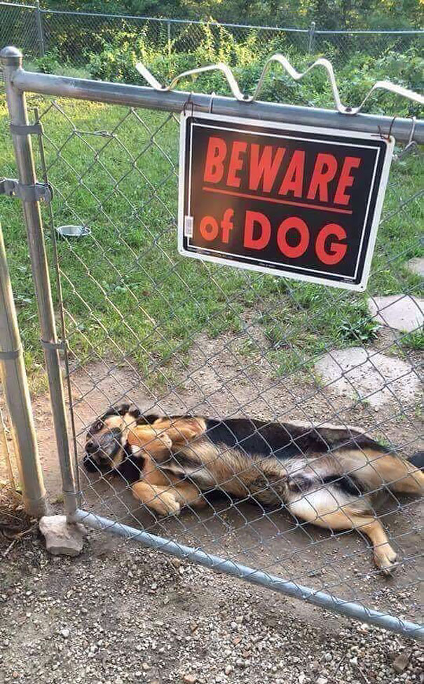 beware-of-the-dog-04