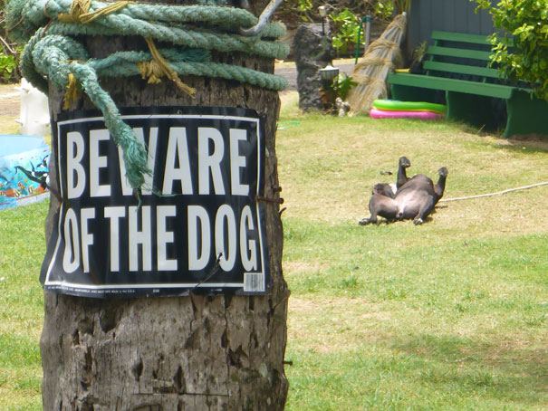 beware-of-the-dog-10