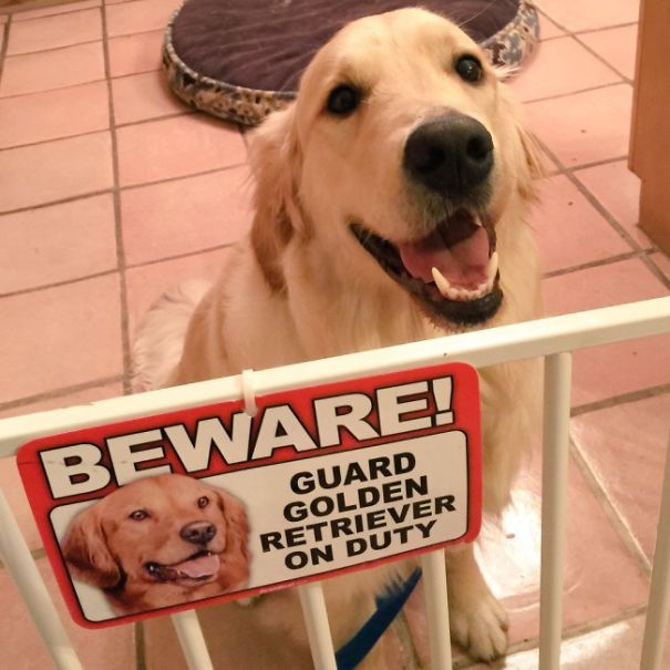 beware-of-the-dog-11