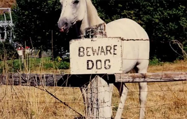 beware-of-the-dog-12