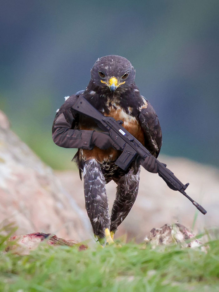 this-hawk-photoshop-battle-is-epic-02
