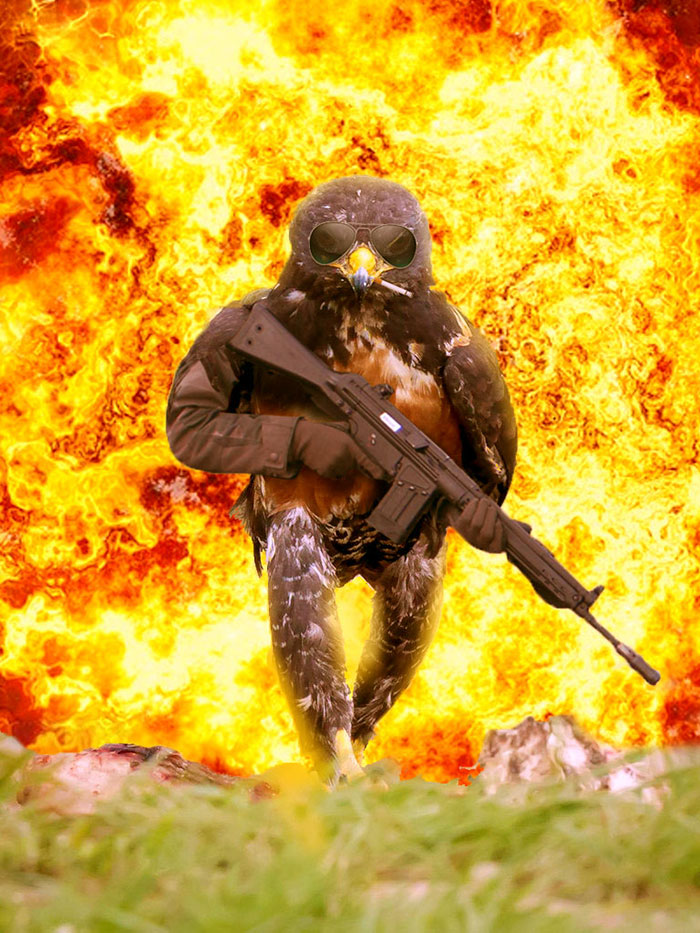 this-hawk-photoshop-battle-is-epic-04