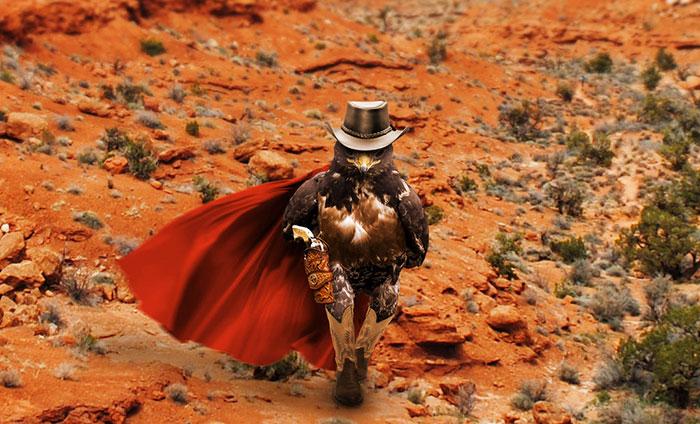 this-hawk-photoshop-battle-is-epic-05