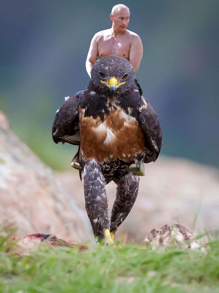 this-hawk-photoshop-battle-is-epic-07