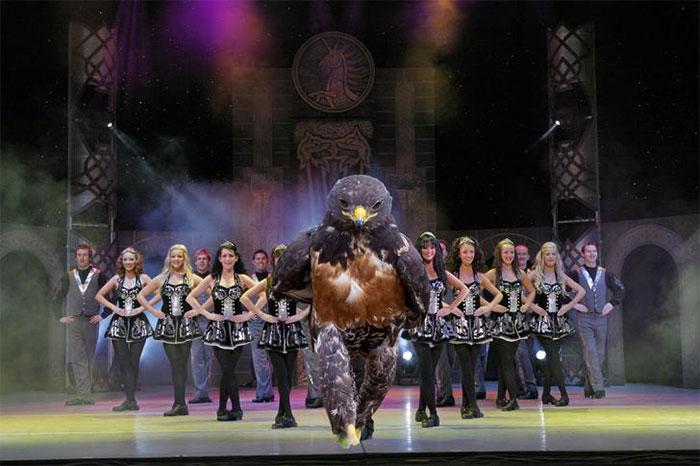 this-hawk-photoshop-battle-is-epic-08