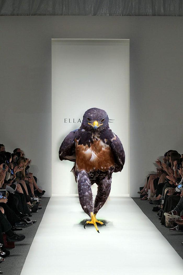 this-hawk-photoshop-battle-is-epic-09