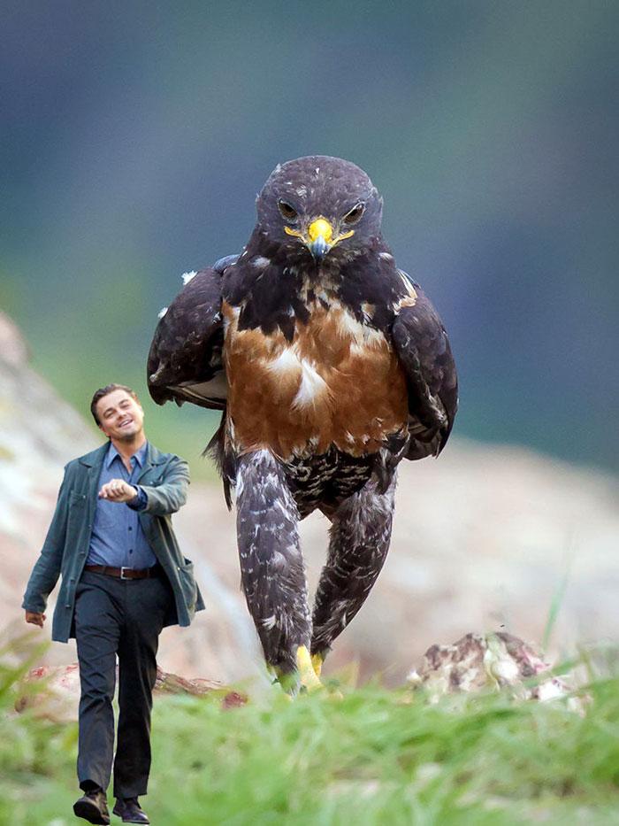 this-hawk-photoshop-battle-is-epic-11