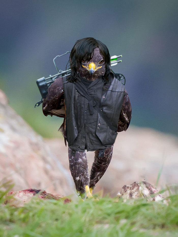this-hawk-photoshop-battle-is-epic-15