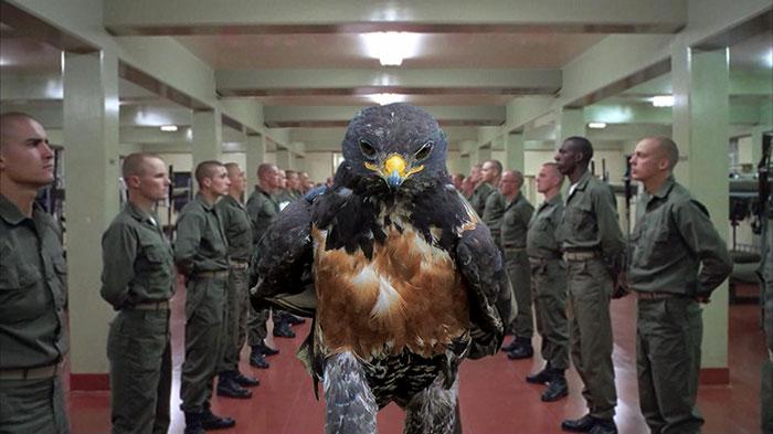 this-hawk-photoshop-battle-is-epic-16