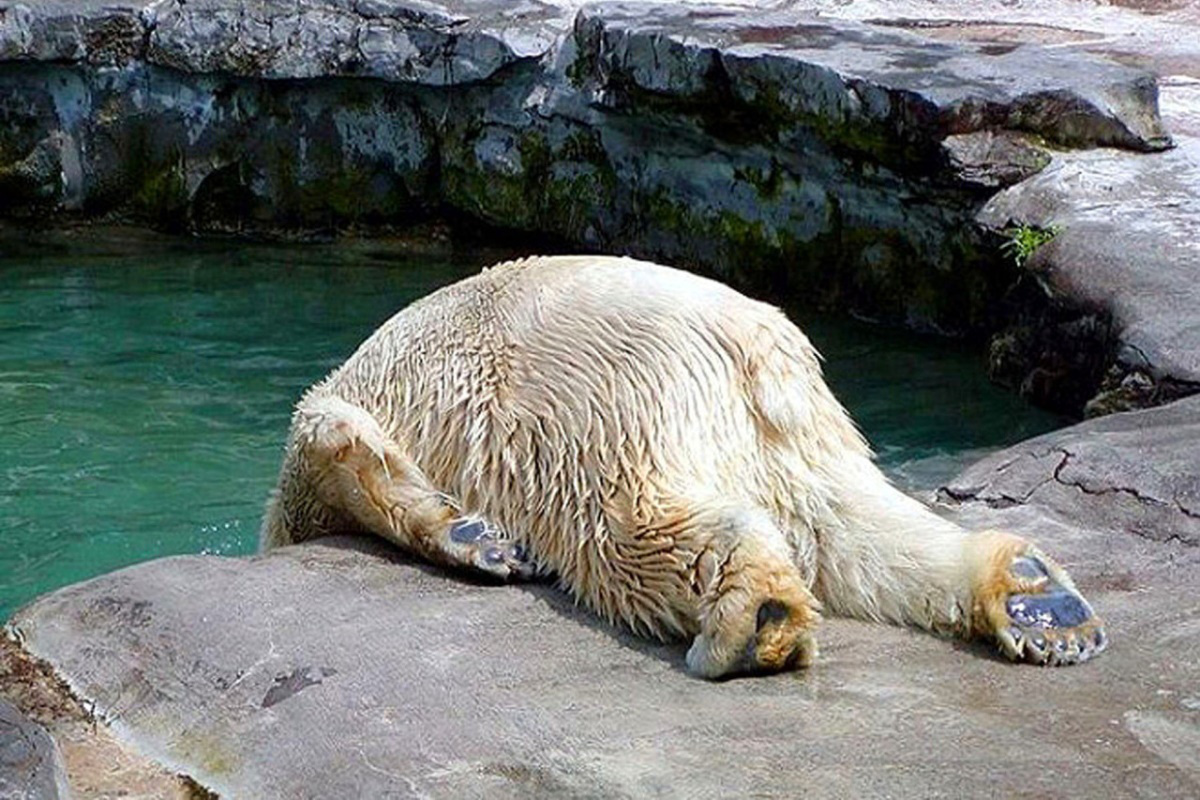 poor-animals-that-had-too-much-to-drink-last-night-01