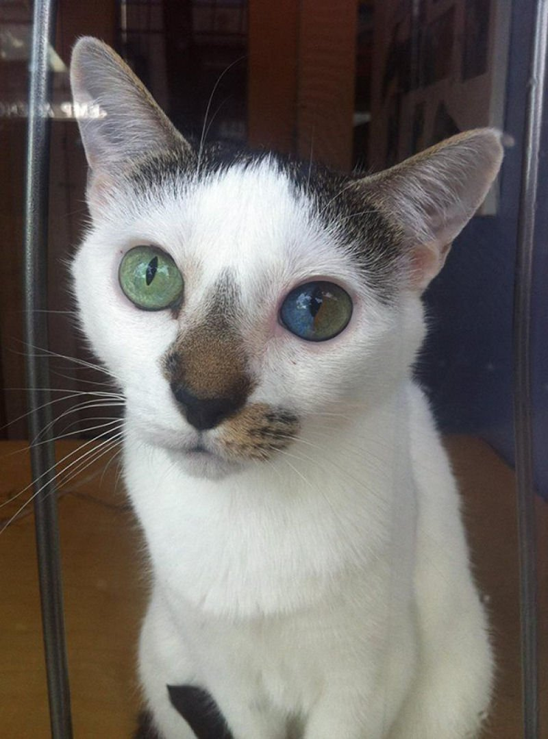 Beautiful Mutations 15 Staggering Photos of Heterochromia4