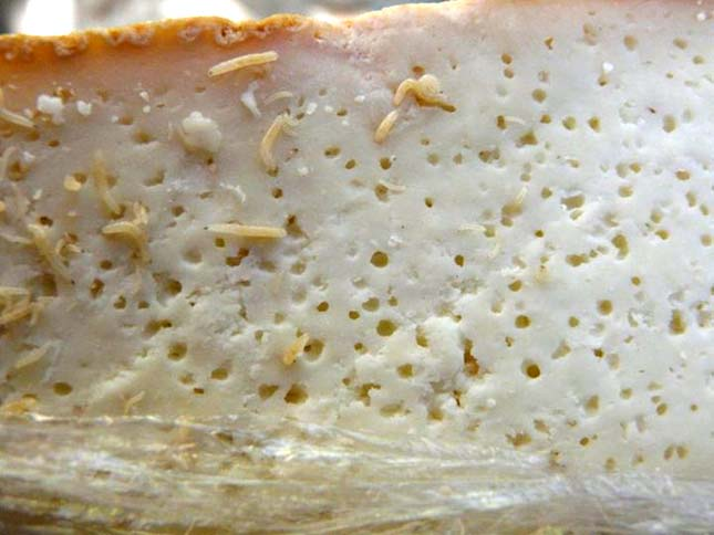 banned-in-US-3-Maggot-Cheese-Casu-Marzu