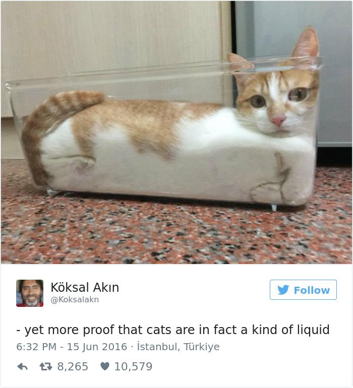 cat heart diseases