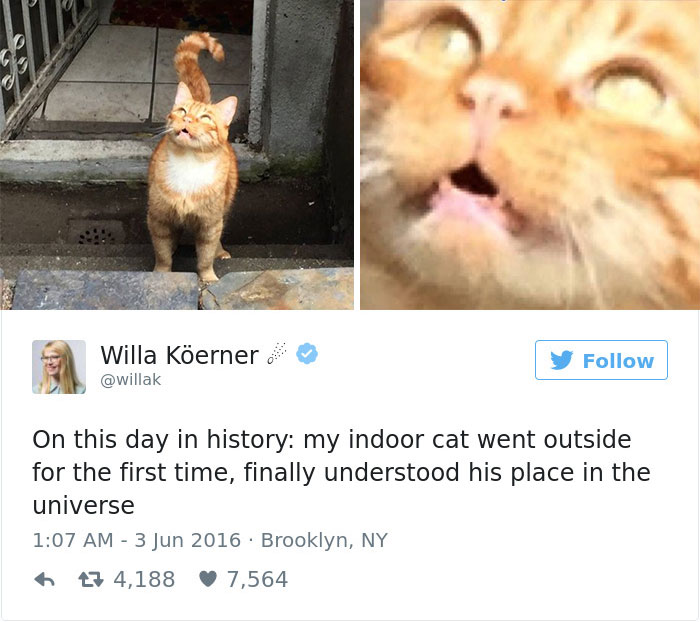 Funny Meme Pages On Twitter : Most meme tastic twitter cats of brain berries