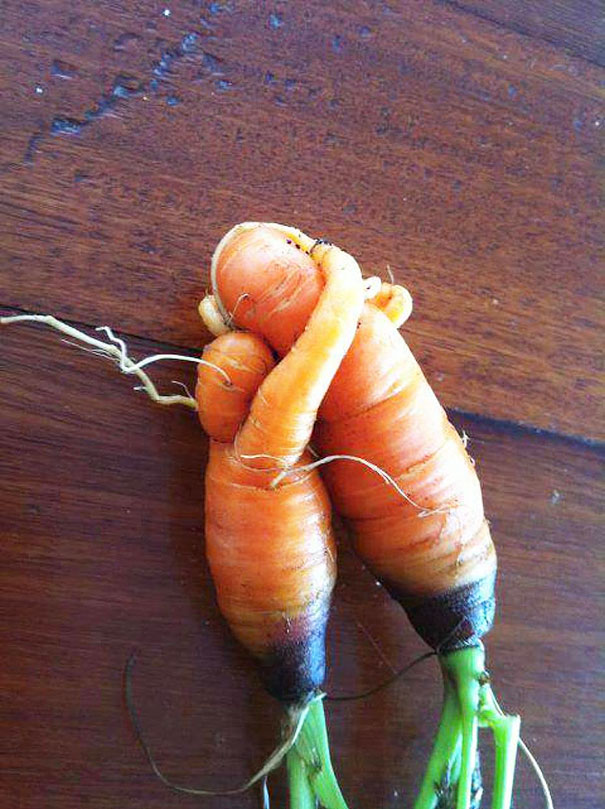 weirdly-shaped-fruits-vegetables- (17)
