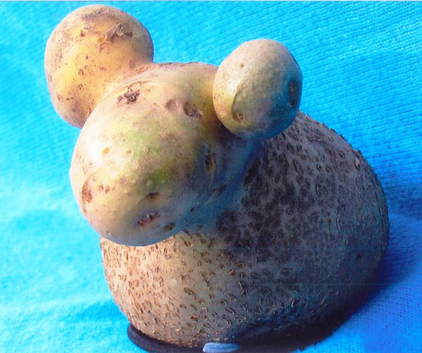 weirdly-shaped-fruits-vegetables- (20)