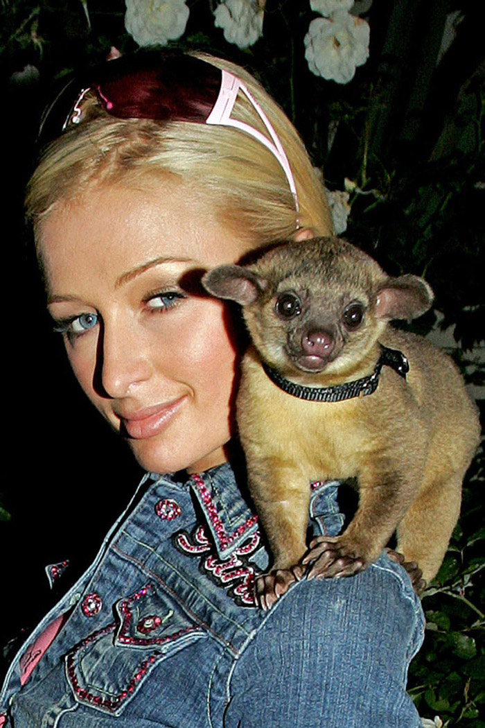 This image has an empty alt attribute; its file name is Top-10-most-unusual-celebrity-pets-weve-ever-seen4.jpg
