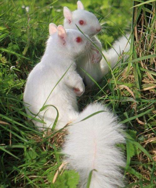 27+ Cutest Albino Animals in the World Plus de 27 animaux albinos les plus mignons du monde #7 | Brain Berries