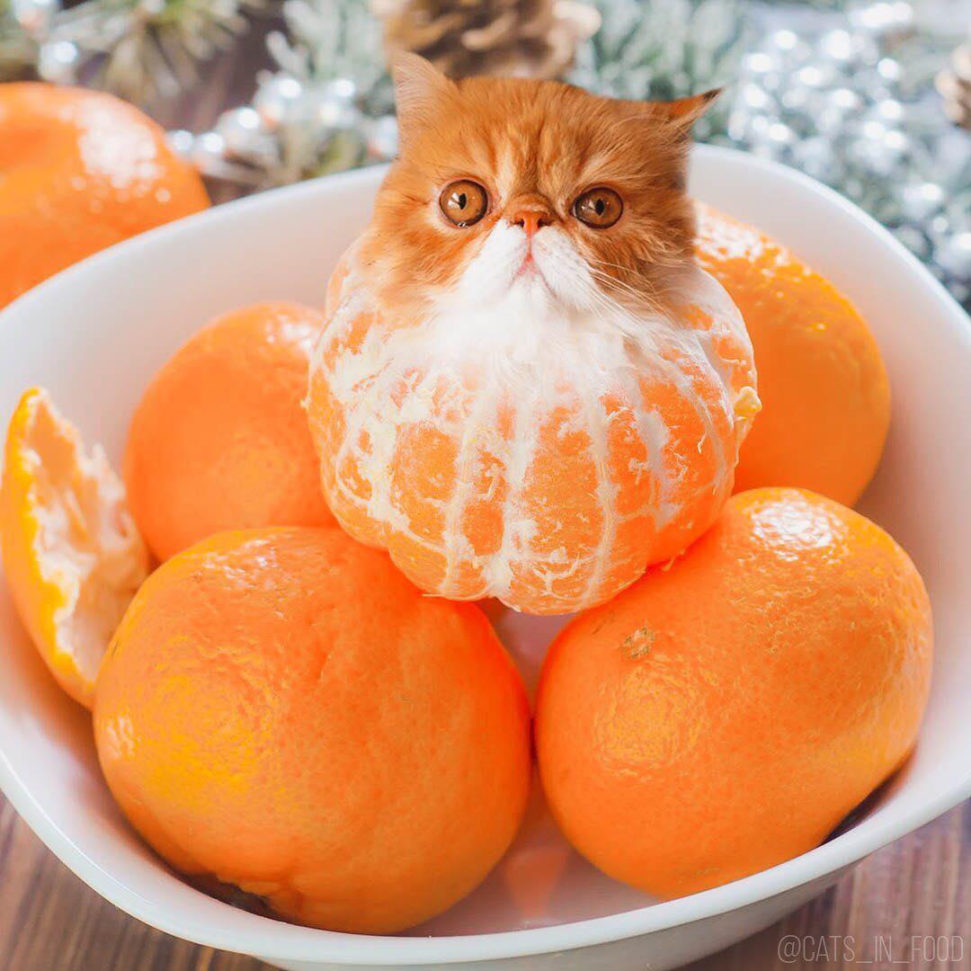Открытки днем, мандарины веселые картинки