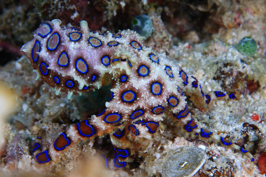 10 Interesting Octopus Facts Straight From an Octopus Himself #10 | Brain Berries