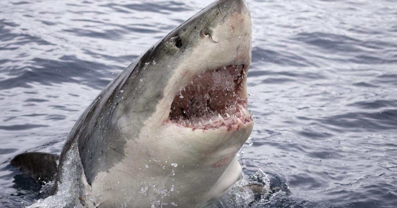Strongest Animal Bites in the World - WAARmedia